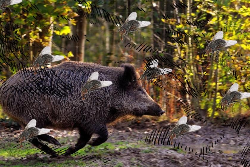 Pig-Pig-Fly-Fly-Kopf